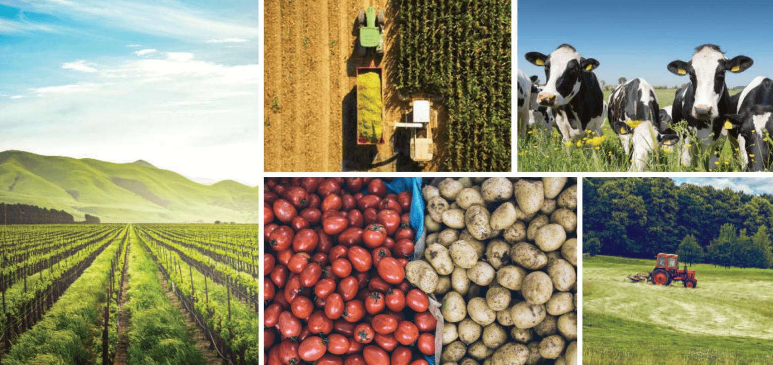 Sürdürülebilir Tarım İlkeleri ve İyi Uygulamalar Rehberi